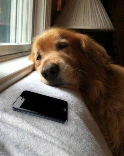 Attendre passoinement ton sms ou ton apelle et que tu me rappelle pas :'(