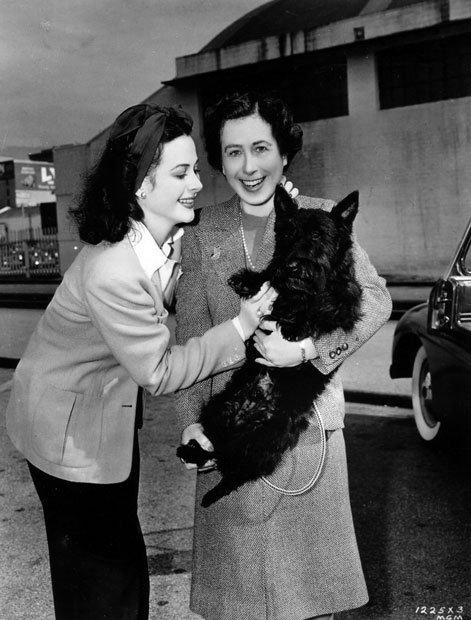 VIE PRIVEE : Hedwig Eva Kiesler alias Hedy Lamarr est née en Autrice. Elle commence sa carrière dans des films allemands et tchèques dans les années 30. Mais dans une production tchèque, elle apparaît nue et devient célèbre à tel point qu'elle décroche un contrat à la MGM. Elle y tourne quelques films dont Boom Town avec Clark Gable et Spencer Tracy. Elle devient célèbre et se voit proposer des rôles importants dans Gaslight ou Casablanca, mais les refuse. En 1949, elle tourne son rôle le plus connu dans Samson et Dalila (Samson and Delilah). Après, elle tourne quelques films avant de prendre sa retraite. En plus de sa carrière cinématographique H. Lamarr est connue comme ayant, sous le nom de Hedy Kiesler Markey et avec son ami le compositeur George Antheil, déposé le brevet d'un système de codage des transmissions appelé étalement de spectre, proposé alors pour le radio-guidage des torpilles américaines durant la Seconde Guerre mondiale, bien qu'il ne fut pas appliqué (Brevet des USA 2,292,387). La technique réapparut dans le domaine militaire dans les années 1960. De nos jours elle est par exemple utilisée par les systèmes de positionnement par satellites (GPS, GLONASS), les liaisons cryptées militaires, les communications de la Navette Spatiale avec le sol, et plus récemment dans les liaisons sans fil Wi-Fi. Dans les années 60, elle tombe dans l'oubli. Elle aura eu six époux et décèda le 19 janvier 2000. COTE COEUR : Hédy se maria 6 fois : Le 10 Août 1933, jusqu'en 1937, elle est la femme de Friedrich MANDL... Le 5 Mars 1939, elle épouse Gene Markey avec qui elle aura 1 enfant, ils divorcent le 3 Octobre 1941... Le 27 Mai 1943, au 17 Juillet 1947, elle est l'épouse de John LODER avec qui elle aura 1 enfant également... Le 12 Juin 1951 elle épouse son 4ème maris, Ernest STAUFFER jusqu'en 1952... Le 22 Décembre 1953, à 1960 elle est mariée à W. Howard LEE... Enfin, le 4 Mars 1963 elle se marie avec Lewis J BOIES mais encore une fois le couple divorce, le 21 Juin 1