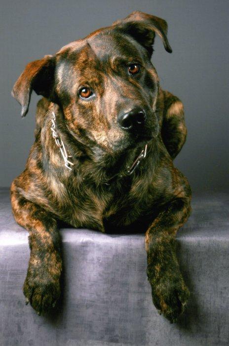 Baxy The Dog