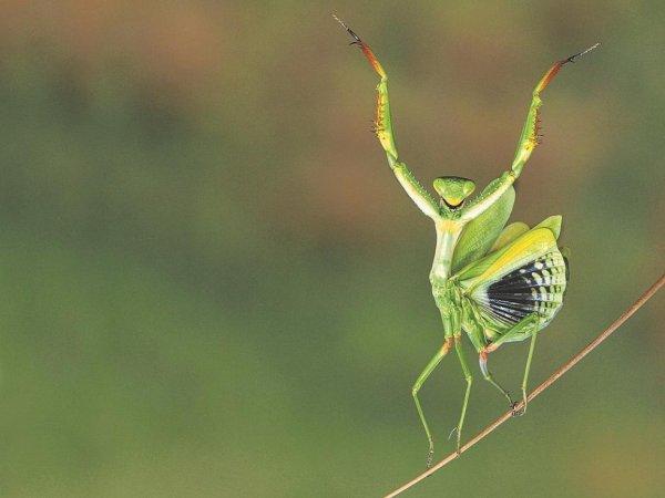 les animaux dansent aussi .le concours:( Sony World Photography ) 2015 . photo 4