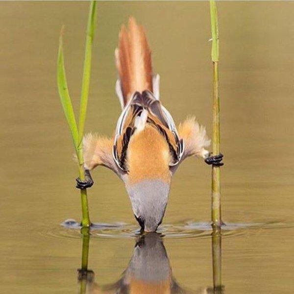 Chefs-d'½uvre de la nature ou quand l'oiseau utilise son esprit même s'il est petit !
