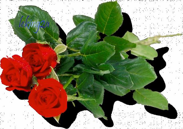 J ADORE LES ROSES ROUGE GROS BISOUS BICHEDU54