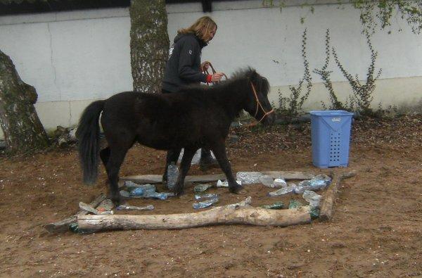 Horse agility <3