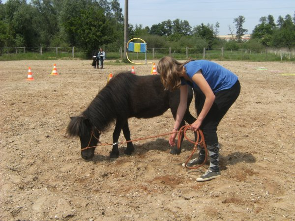 Horseagility
