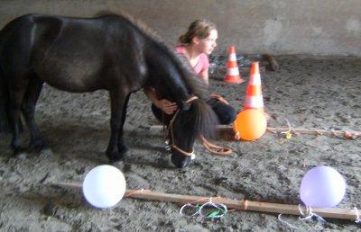 Horseagility !!!