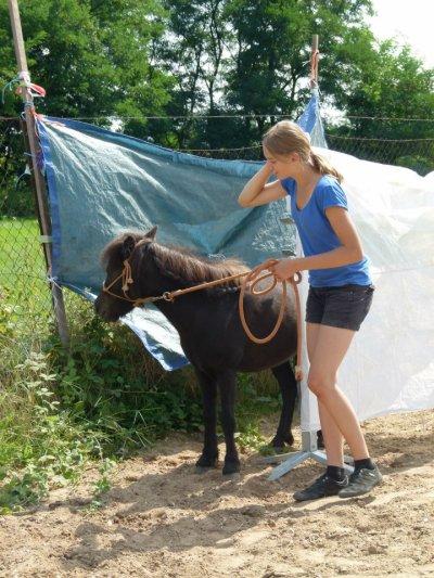 Horse - agility :)))))))))