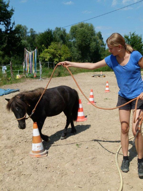 Avant de monter un cheval apprenez d'abord à marcher a ses côtes...