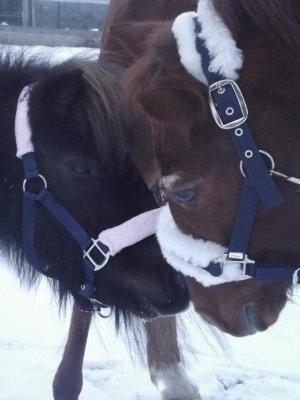Très loin, au plus profond du secret de notre âme, un cheval caracole... un cheval, le cheval ! Symbole de force déferlante, de la puissance du mouvement, de l'action. ♥