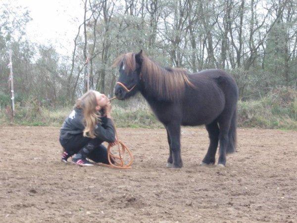 Travaille un cheval comme si tu demandais la permission.