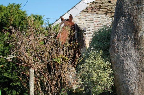 poney a la maison