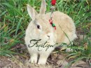 Photo de Fanatique-de-lapin