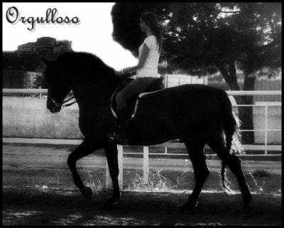 Spanish horse =)
