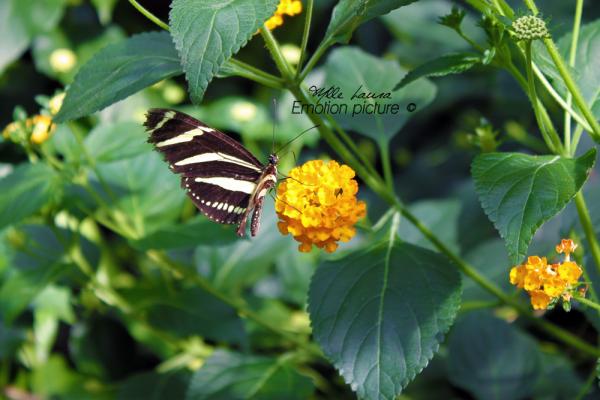 """"""" Jardin des Papillons  Hunawihr """""""