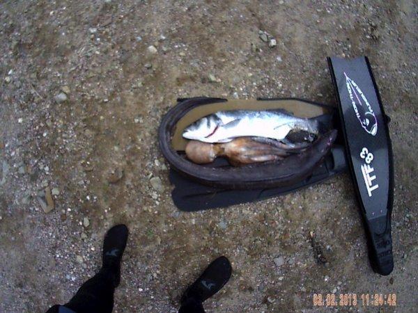 sortie du 02  02 2013 avec les thon thon au complet avec ce loup de 3kg 5