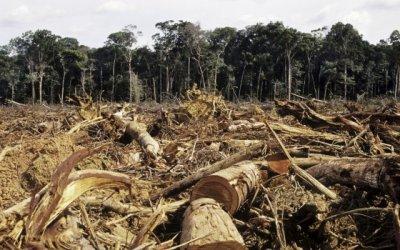 Probleme de l'huile de palme