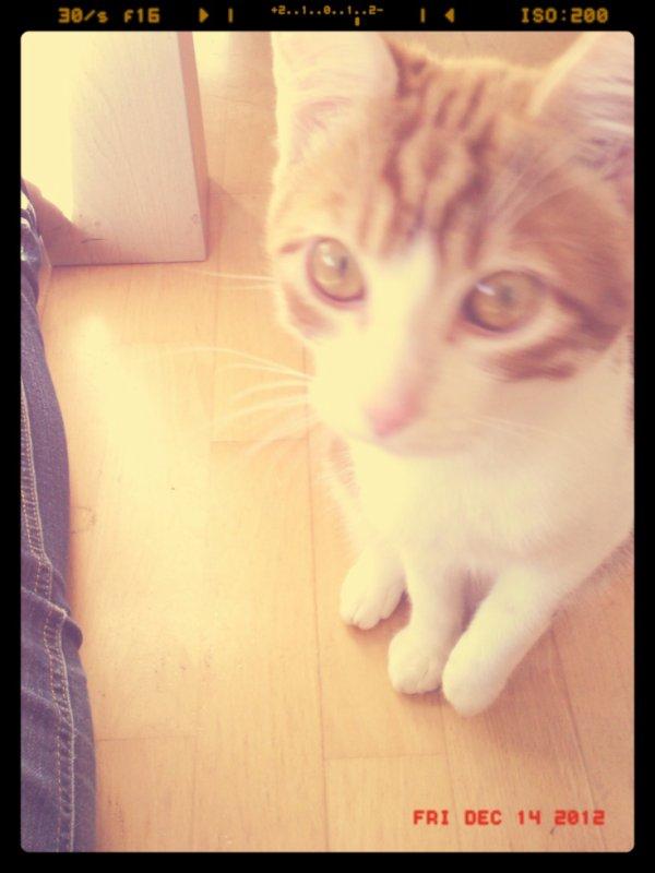 Mon ptit' bout de chat !
