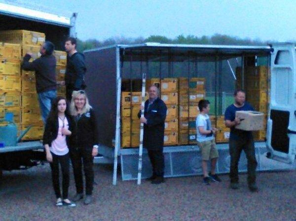 ce week end VIVONNE  pour le SG35 ,1082 pigeons lachers 9h30