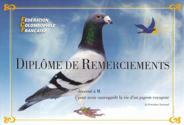 diplome a offrir en cas de signalement de pigeons.(n'hésitez pas a remixer)
