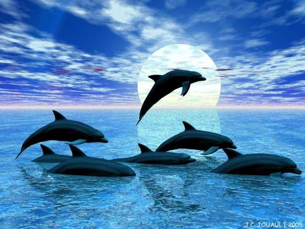 encore les dauphin