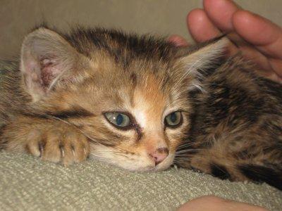 mon bebe chat d amour