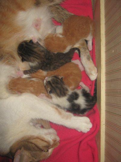 maman et les bébés née le 13 11 2011