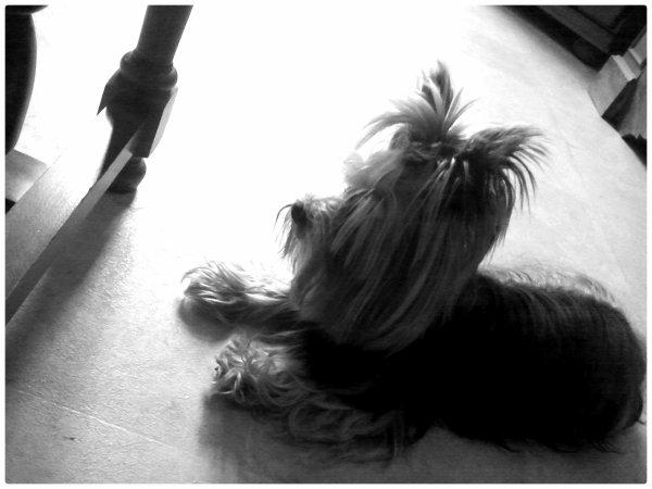 Floky Mon Petit Chien!<3