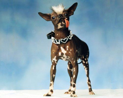VOICI PAQUITO IL CHERCHE UNE COMPAGNE N HESITEZ PAS A LE CONTACTER LAISSEZ VOTRE COMM OK ///OK ***MERCI POUR LUI ***************************************************************************************************************