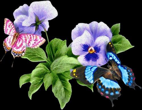 Butterfly1121 VOUS OFFRE UNE PENSEE POUR CES DEUX ADORABLES PAPILLONS *************************************************************************************************************