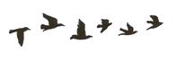 Les mots sont des pigeons voyageur qui cherchent à s'envoler dans l'air du temps