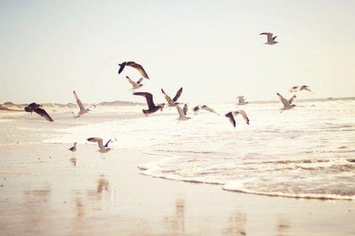 «Un poème est un mystère dont le lecteur doit chercher la clef.» Stéphane Mallarmé