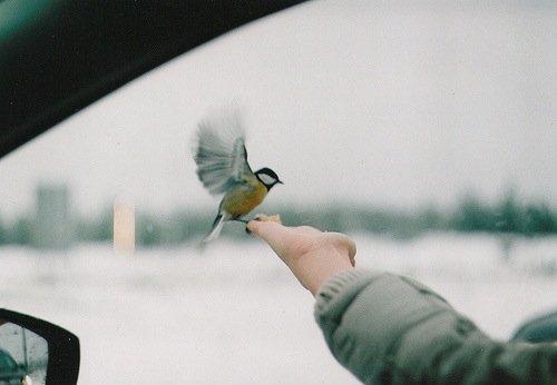 « L'oiseau en cage rêvera des nuages. » Proverbe japonais