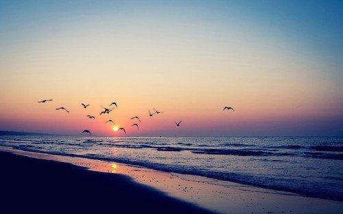 Je me suis perdue à contempler la liberté d'un vol d'oiseau