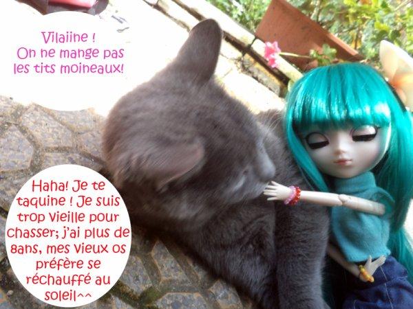 Amitié Féline part 2