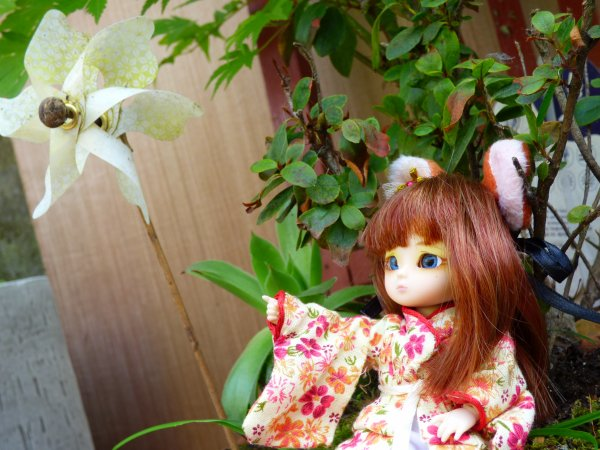 Meiko petite kitsune