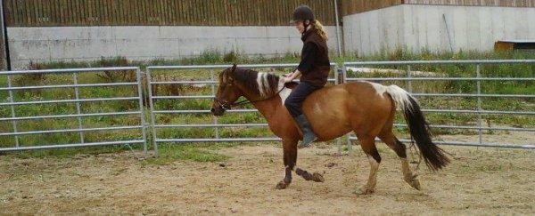 «Il n'y a pas de secrets aussi intimes que ceux d'un cavalier et de son cheval.»