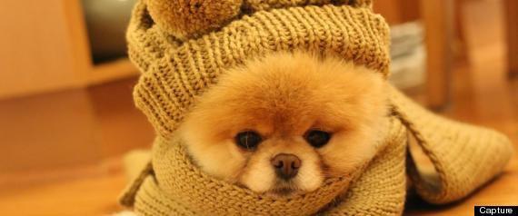 Boo le chien qui fais dire ohh il est trop cute!