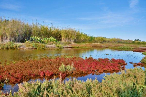 Lagune de formosa (Pt)