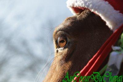 Séance photos pour Noël !!!!
