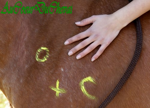Carnaval à cheval !!!!!