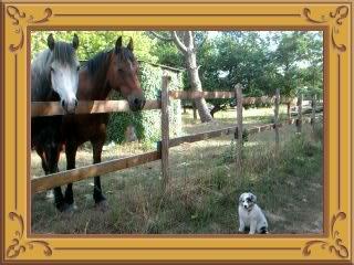 Gaiety et les chevaux  ...
