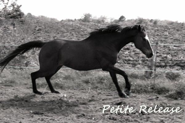 Si quelqu'un te dit qu'il ne s'agit que d'un cheval, continues à lui sourrire en lui expliquant qu'il n'est que humain, beaucoup trop de choses lui échappe pour qu'il puisse comprendre.