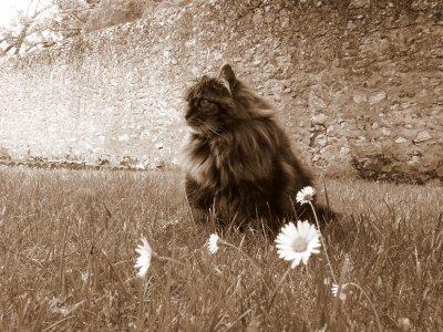 Un pitite fleur :D