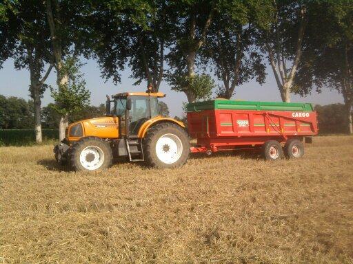 moisson du blé dur