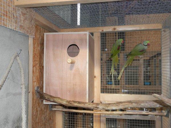 blog de passionoiseaux29 page 3 passion oiseaux. Black Bedroom Furniture Sets. Home Design Ideas