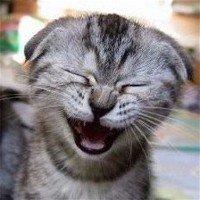 des animaux trop mimi les chats ^.^
