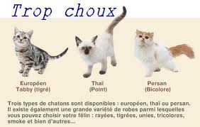 Les Chaton ♥