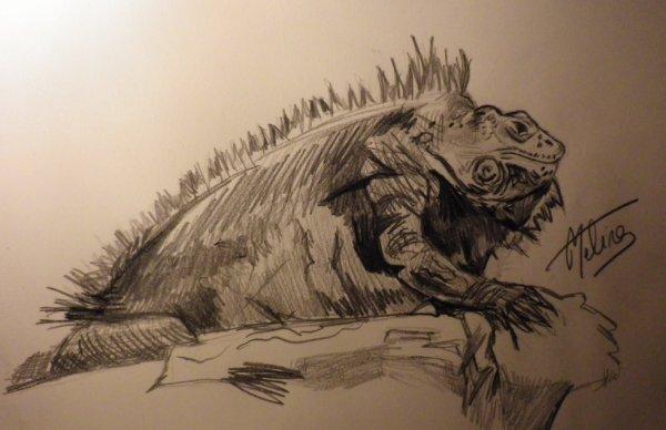 Dessin 17 - Iguane