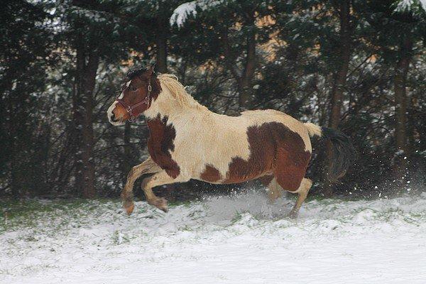 * Photos dans la neige 18 Janvier 2013 *