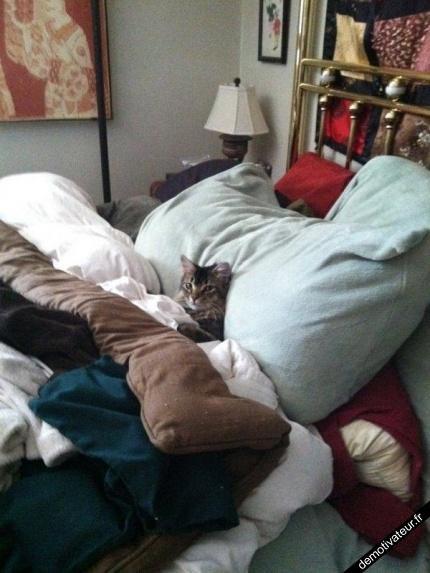 Extraits du journal intime du chat Jour 395.....