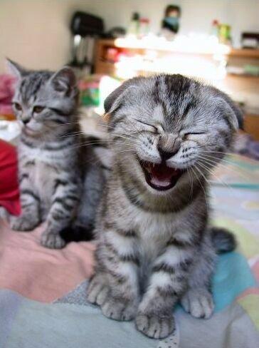 Extraits du journal intime du chat Jour Jour 460 ou plus ........ je ne sais plus